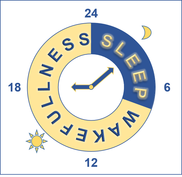 Human sleep-waking cycle